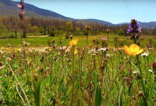 Метронидазол и беременность